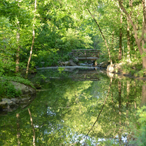 A stream reflects the lush green trees of the North Woods