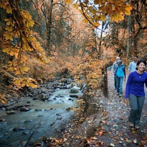 Visitors walking a path beside a wooded stream in Forest Park