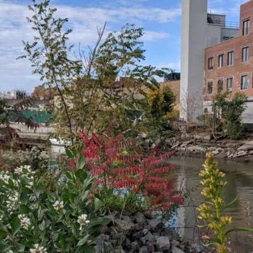 A view of the Gowanus Canal seen through a thicket of flowering brush