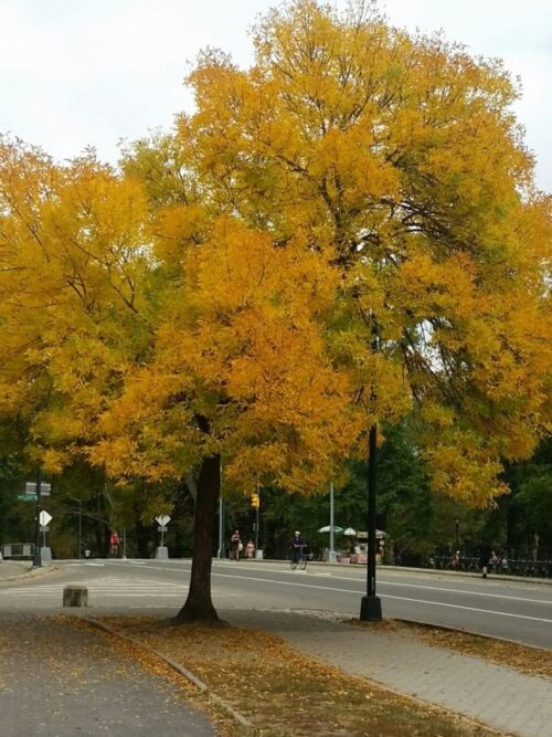 Blog tall 1x What Are Colorful Trees 3