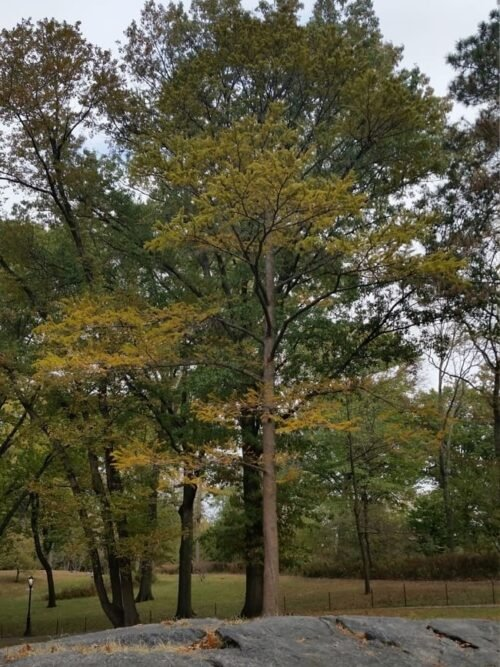 Blog tall 1x What Are Colorful Trees 5