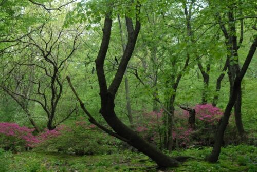 The walk winds its way through thick undergrowth and spring-green trees.