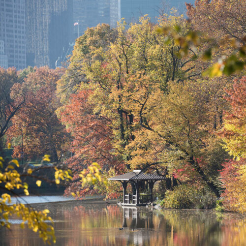 Western Shore Boat Landing, with autumn leaves reflected on the Lake and apartment buildings in a hazy background.