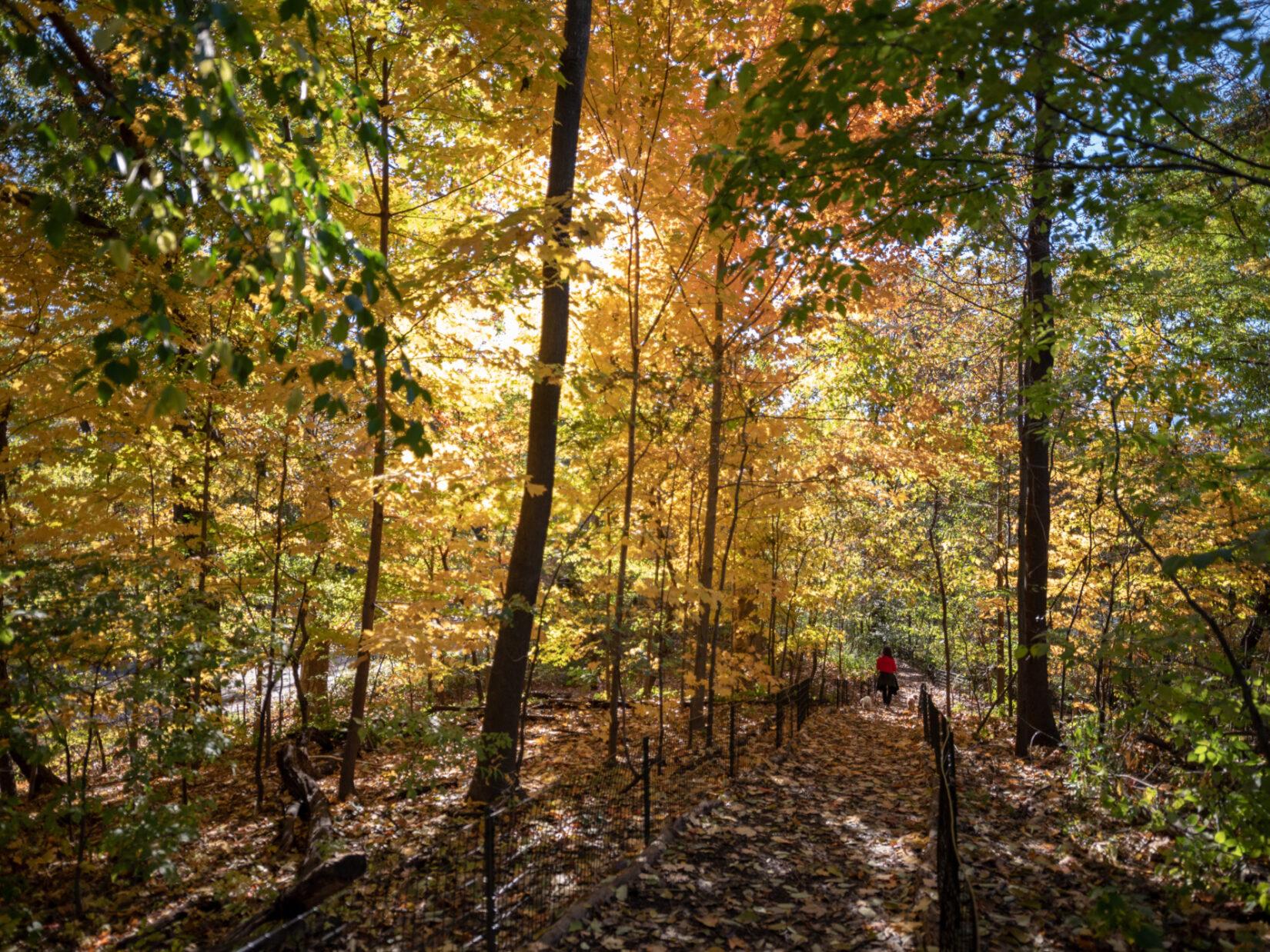 Schenck Central Park Ramble 2018 11 07 DSC 4589
