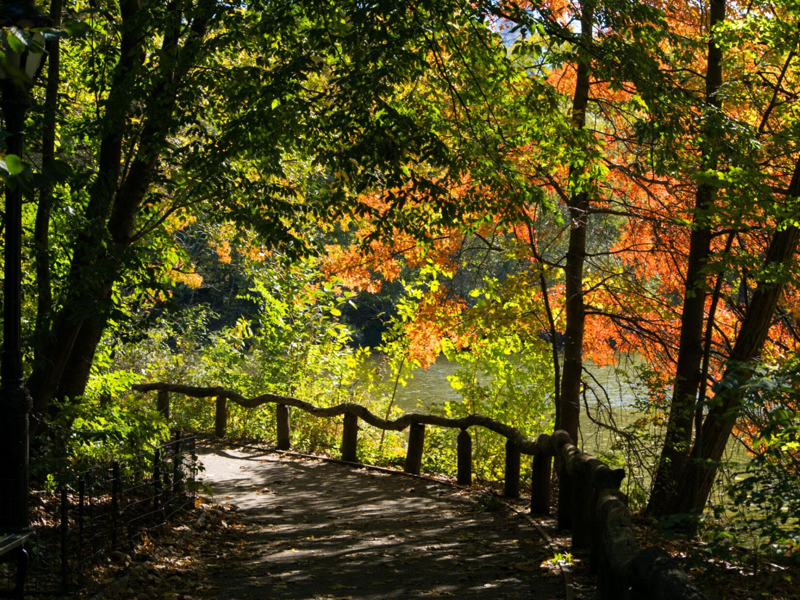 A path through the Ramble