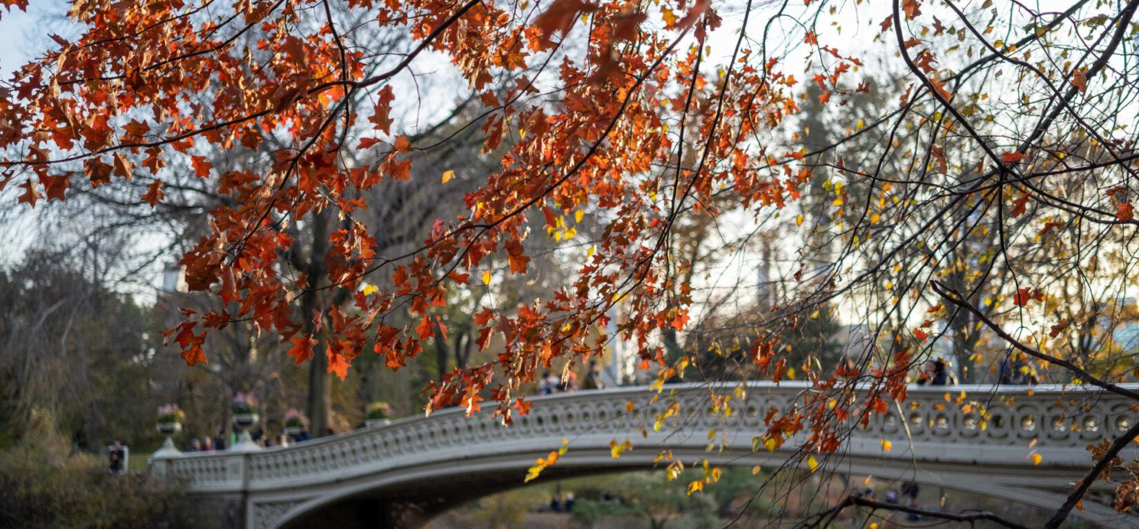 Bow Bridge Fall 20191114 04541