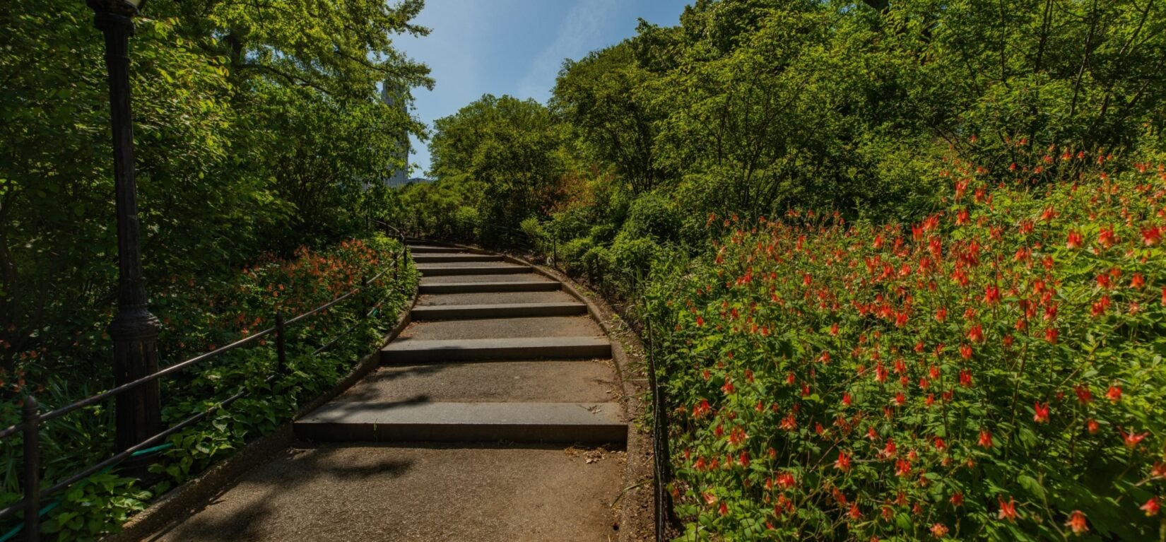 A graceful, inclined path winds through Dene Slope, surrounded by thick trees, grasses, and flowers