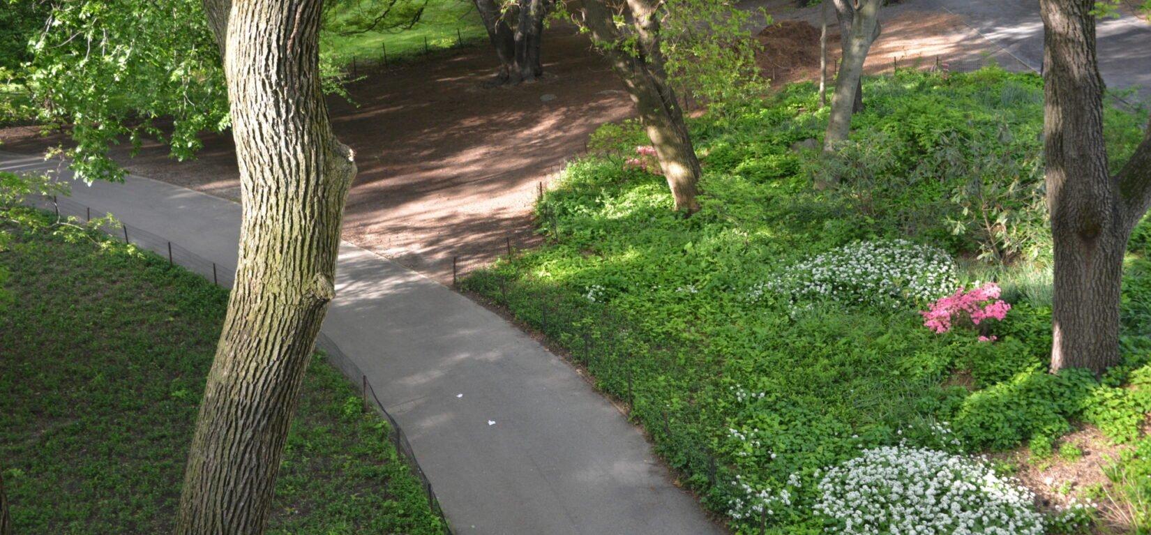 A shaded curve on the Azalea Walk