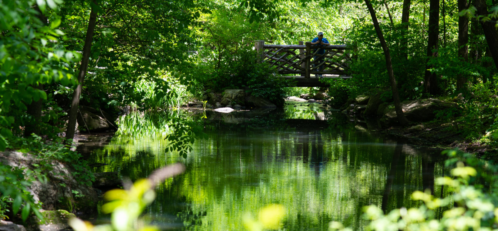 A rustic bridge spans the Loch surrounded by the lush North End of Central Park