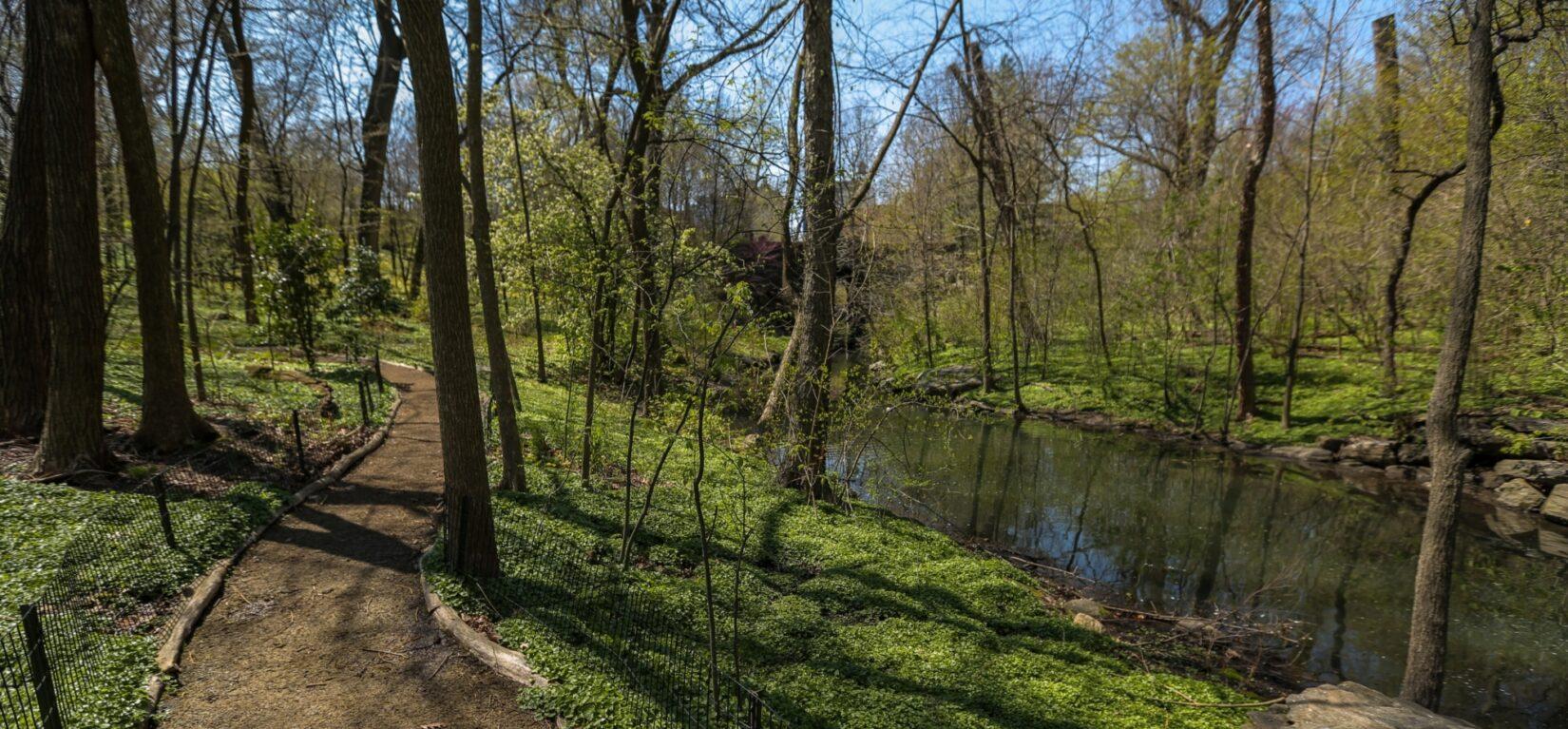 A rustic path winds alongside a stream in the Ravine