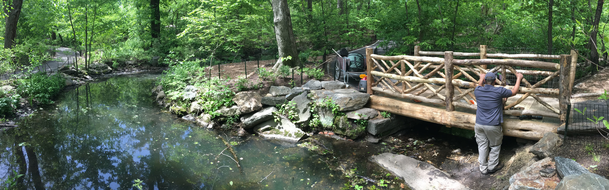 A Conservancy worker seen maintaining a rusitc bridge in the Ramble